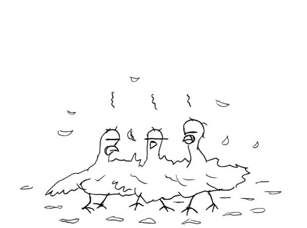 pigeons-gazette-atomique-6